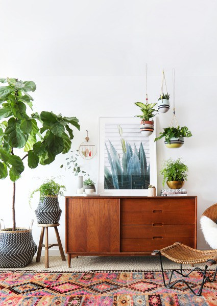 Plants – Personalise A Rented Apartment